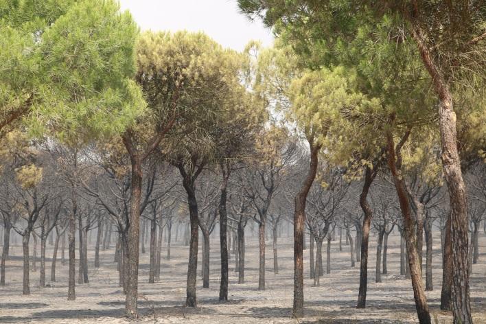 20170626 Incendio Mazagón bosque quemado (2)